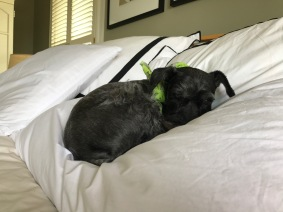 rosie on bed.jpg